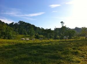 landbankingmain