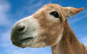 get away donkey 1