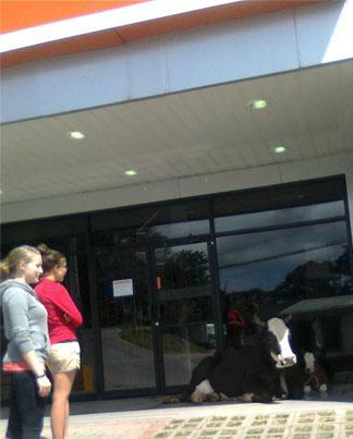 Let's Get a Cow to Guard the ATM