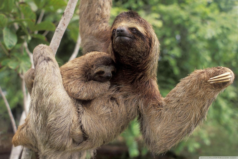 Costa Rica Animals | Beautiful Scenery Photography