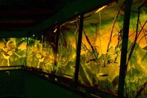 costa rica monteverde bat jungle 1
