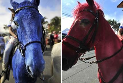 Yep We Dye Our Horses Here Too