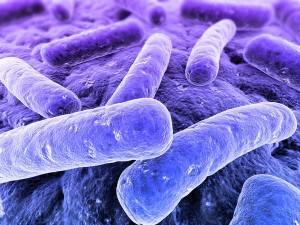 Bacterial_Infection
