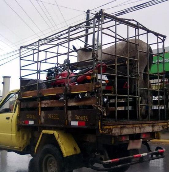 Costa Rica Live Animal and Motorcycle Transport