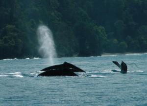 bahia ballena costa rica