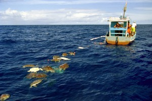 sea turtles killed