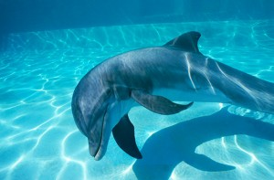 dolphin-assisted-birth