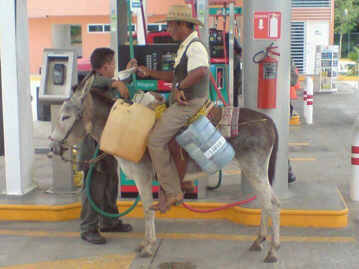 Diesel Please for My Donkey