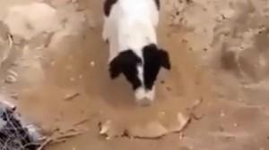Dog Burying Puppy main