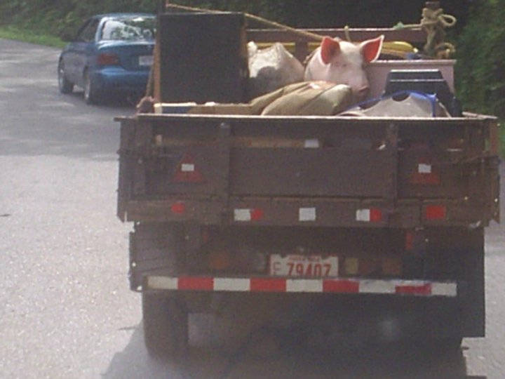 We Deliver Furniture and Pigs