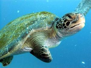 costa rica scuba diving 1