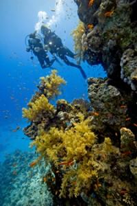 costa rica scuba diving 2