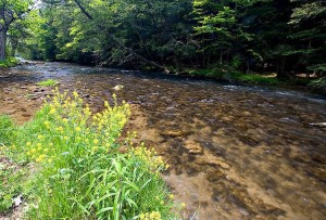creek fishing 1