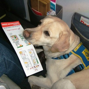 shipping dog to costa rica 1