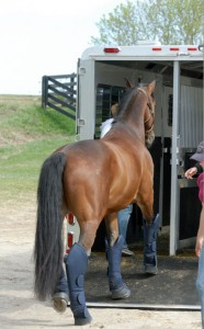 shipping horse to costa rica