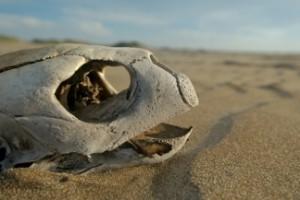 turtle egg poaching costa rica