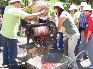 costa rica coffee-tour
