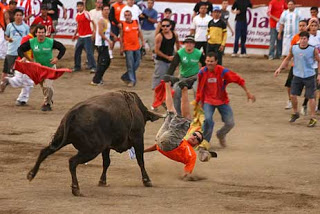 costa rican bullfights