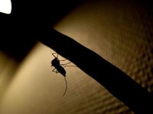 dengue fever outbreak costa rica 1