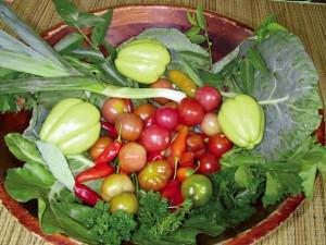 organic farming costa rica 1