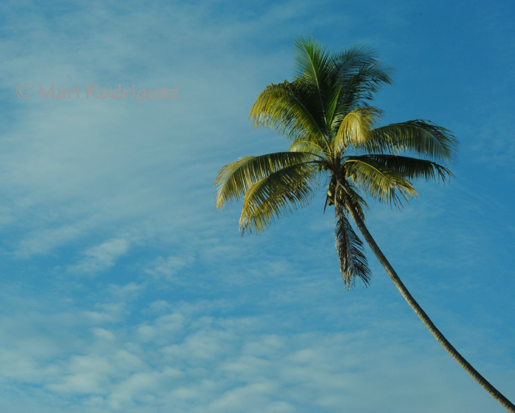 Playa Hermosa Manzanillo Santa Teresa costaricantimes
