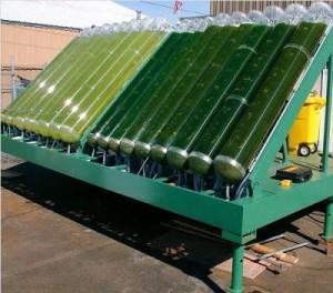 algea-biofuels costa rica