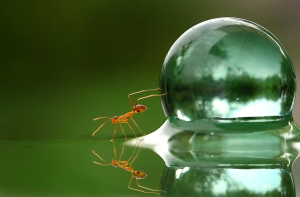ants in glass of water