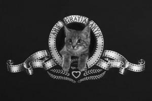 cat video festival 2013 1