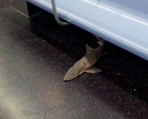 shark on subway in new york