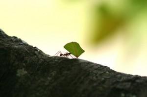 costa rica ants 1