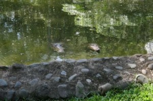 costa rica crocodiles