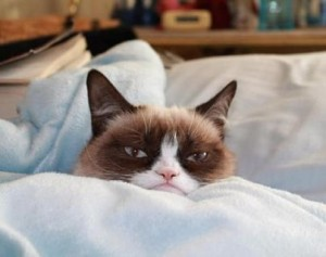 grumpy cat video main 1