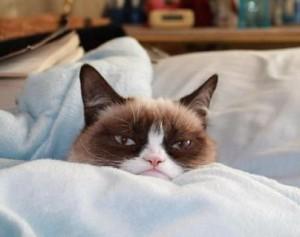 grumpy cat video main 1
