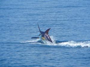 costa rica sport fishing