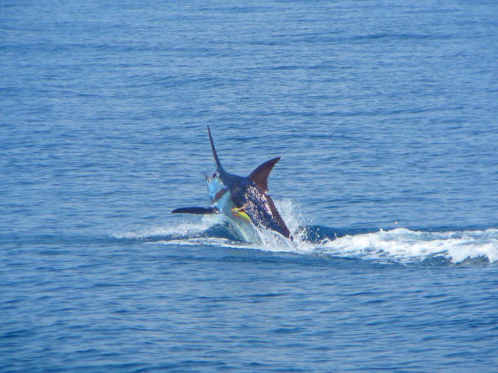 Costa Rica Fishing 101 Sport Fishing Hot Spots Puntarenas