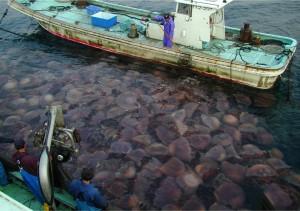 jellyfish population growth 2