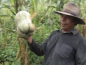 sustainable farming costa rica