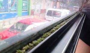 Costa Rica Carbon Friendly Bus