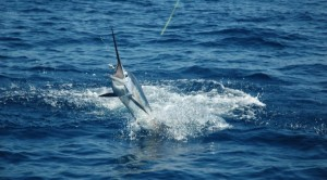 costa rica sport fishing main
