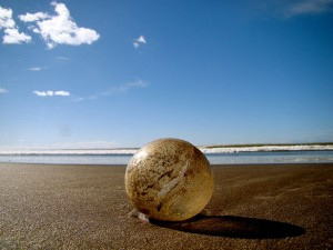 sea-turtle-egg1