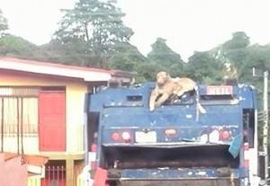 Costa Rica Trash Mascot