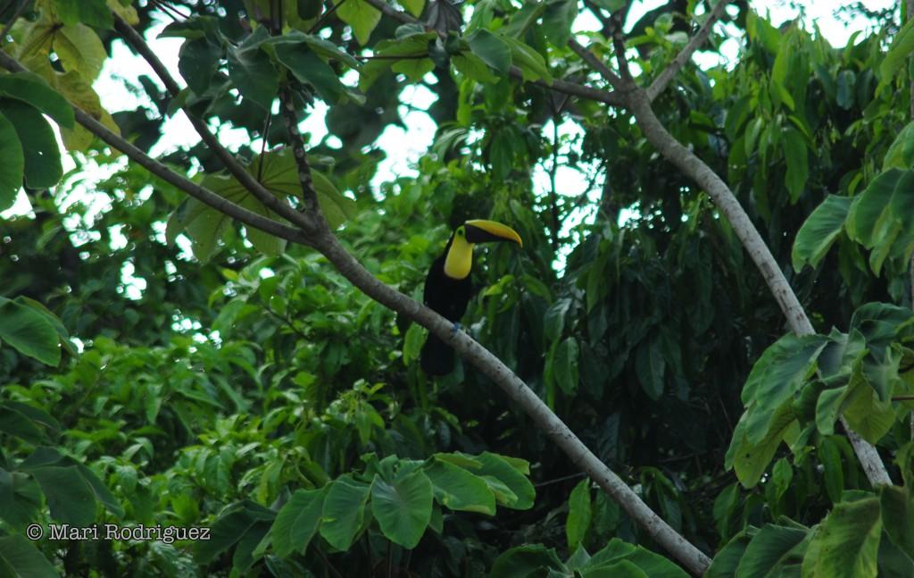 Jaco Beach Costa Rica bird watching costa rica