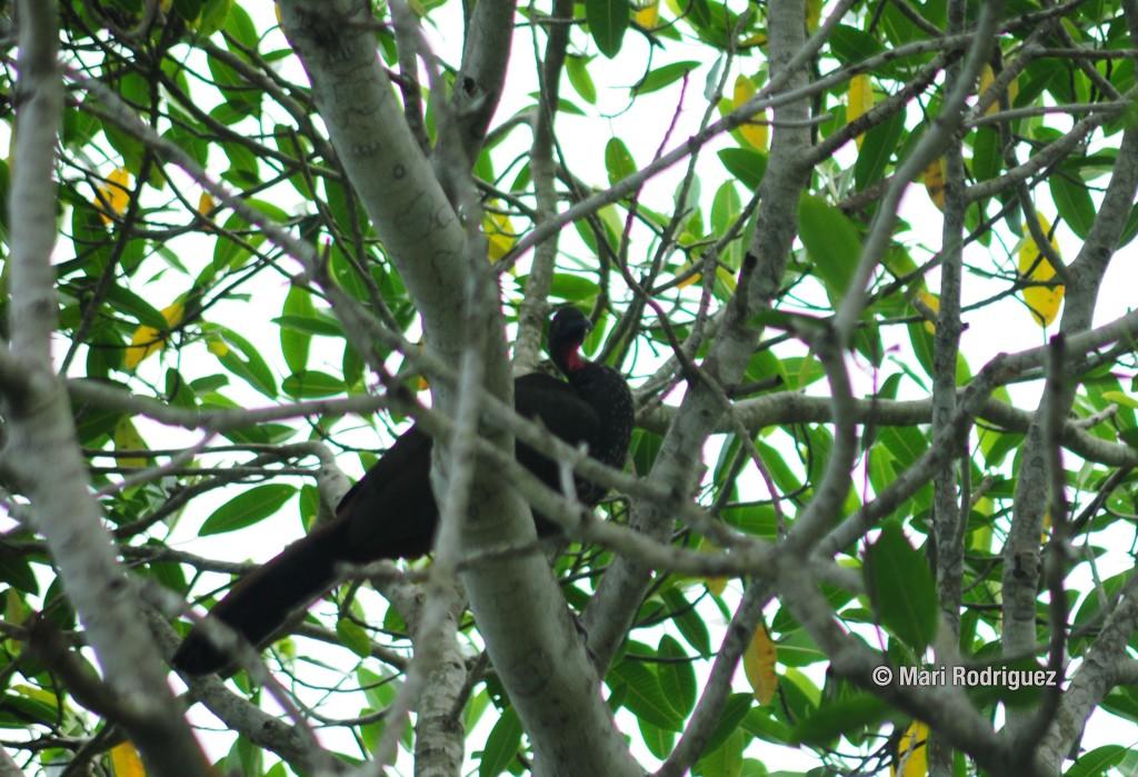 bird watching costa rica jaco costa rica