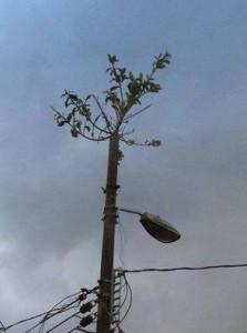 Costa Rica Lamp Post