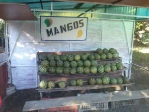 Huge Costa Rican Mangos