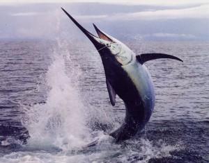 los suenos fishing 1