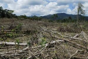 narco deforestation - robert hyman