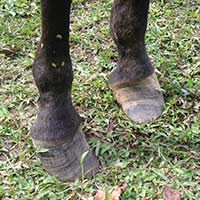Costa-Rica-poor-footcare