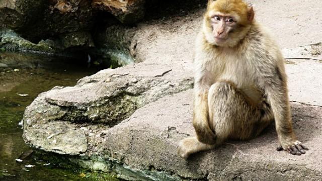 costa rica simon bolivar zoo animals