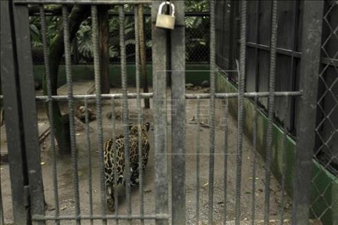 costa rica zoos closing 1